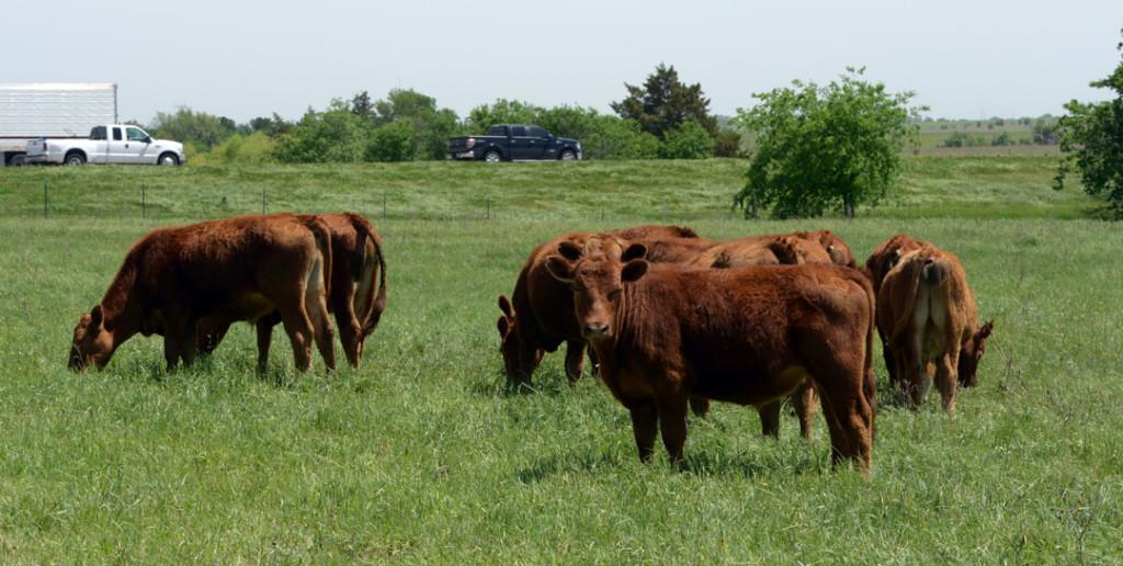 pace-steers