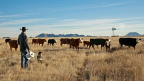 Managing Cattle to Improve Watershed Health